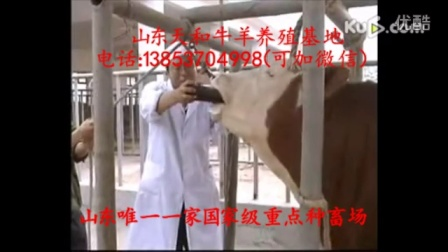 山东改良肉牛养殖山东改良肉牛养殖技术资料视频