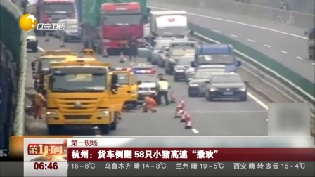 """杭州:货车侧翻 58只小猪高速""""撒欢"""" 第一时..."""