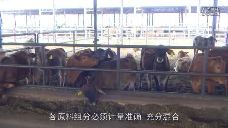云南规模化肉牛养殖技术视频