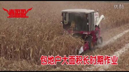 喜盈盈玉米割台收获-包地大户