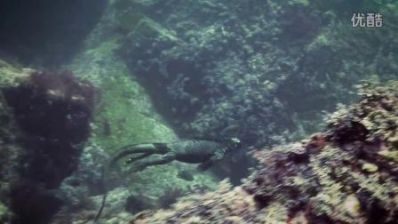 迷你哥斯拉:海鬣蜥