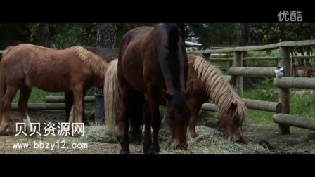 1032K高清实拍农场家畜马羊牛素材农业养殖业实拍动物视频