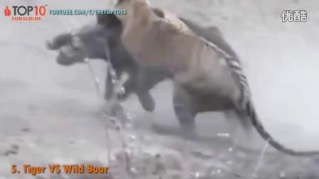 世界上战斗力最强悍的10种动物,羚羊调戏老虎