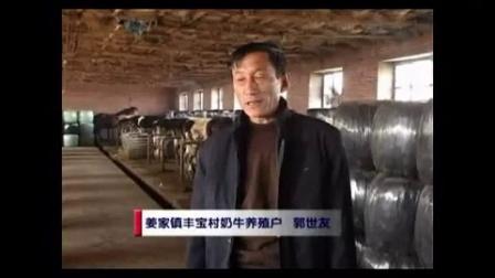 主流播报玉米秸秆变废为宝玉米秸秆青贮养牛技术视频