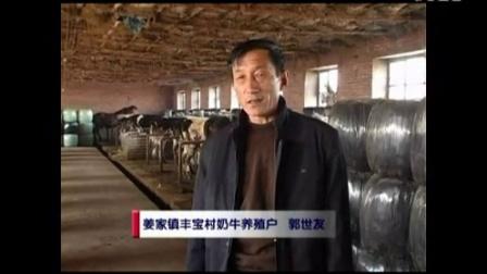 饲草青贮储存方法玉米秸秆青贮养牛技术视频