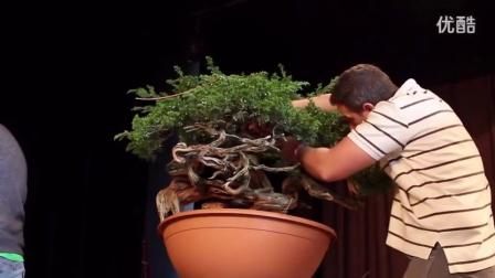 爱木盆景 松树盆景整型盘扎示范,舍利雕刻技术厉害,值得细看
