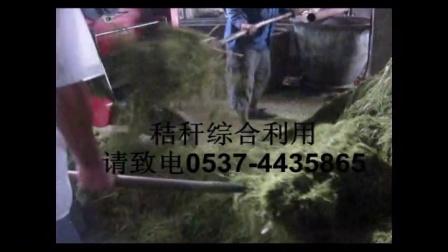 千阳利用玉米秸秆青贮方法养牛节约成本视频