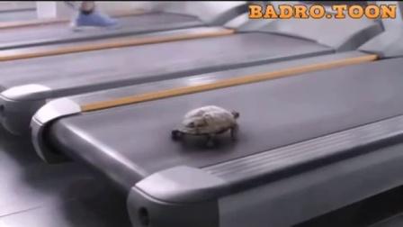 小乌龟都开始用跑步机锻炼身体了,谁再说它跑得慢,看我不打死他