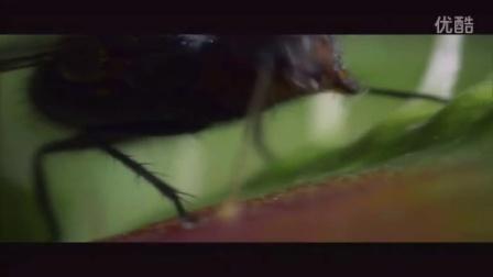 《生态系统的信息传递》教学课例(人教版高二生物,北京师范大学南山附属学校:祝义兰)