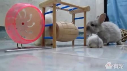老鼠和兔子才是真爱,毕竟尺寸很合适