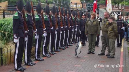 世界上最高军衔的企鹅晋升准将