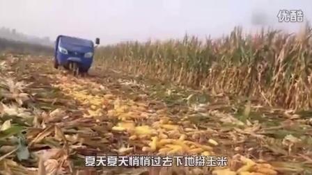 童声演唱《包玉米》