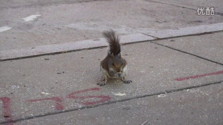 吃饼干的小松鼠