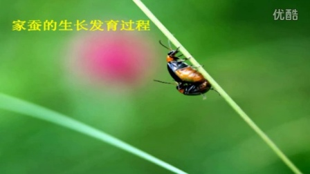 初中生物人教版八年级《昆虫的生殖和发育》名师微型课  北京谭荣誉