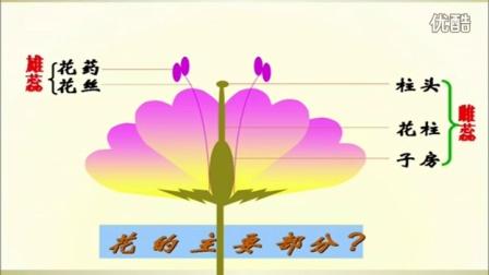 初中生物人教版七年级《开花和结果》名师微型课 北京钱冲