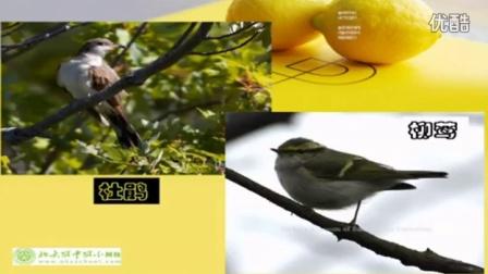 初中生物人教版七年级《环境对生物的影响02》名师微型课 北京钱冲