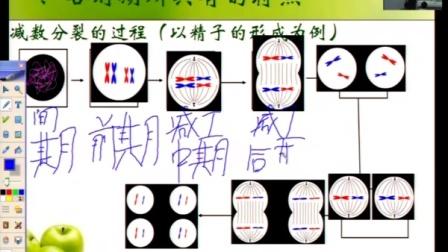 第五届电子白板大赛《减数分裂和有丝分裂比较》(人教版生物高一,河北邢台外国语学校:李艳菊)