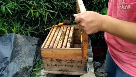 养蜂之家站长抖蜂视频分享
