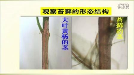 初中生物人教版七年级《苔藓植物》名师微型课 北京钱冲
