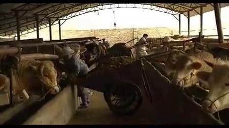 养牛国家补贴多少一头牛-大爱三农FRJ4N视频