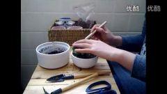 黑龙江乌克兰蜜蜡平安扣多肉植物的种植教程视频