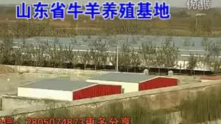 大爱三农-国家养牛补贴88T64视频