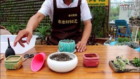 曲靖乌克兰蜜蜡加盟多肉植物种植全过程视频