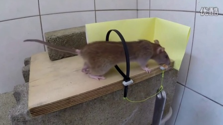 Top Mouse Trap VERY EFFECTIVE And Simple Created Compilation video 2016