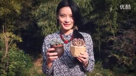 成都乌克兰蜜蜡批发多肉植物新手上盆教程视频