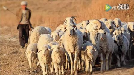《家乡二人台》发财放羊调