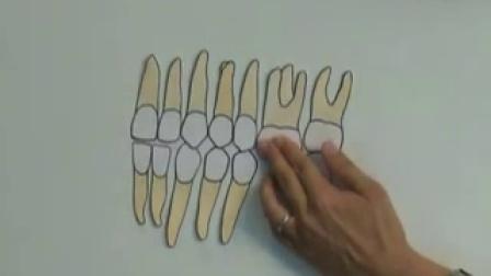 32. 後排牙齿拔掉了,1定要做假牙吗宋亭萱医师 专访