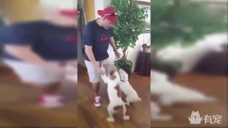 狗狗见到久别的主人,激动得泣不成声