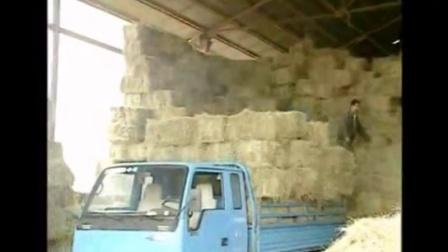 农村养殖项目,架子牛育肥牛的饲料配制视频