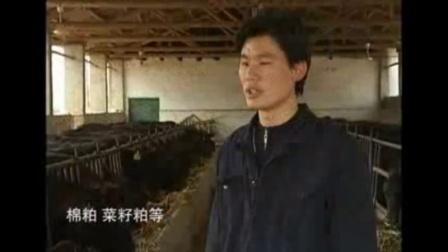 适合农村养殖,安格斯牛后备种牛的饲养管理视频