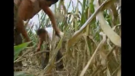 小投资养殖项目,养羊秸秆青贮原料的要求