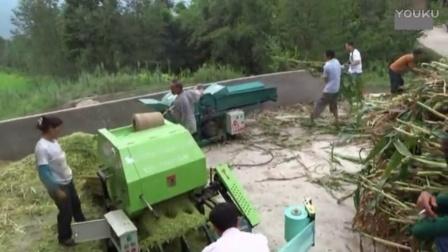 玉米秸秆青贮养牛饲草料青贮机械视频
