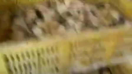 福鼎市五黑肉鸡苗qq456136扯白糖视频图片