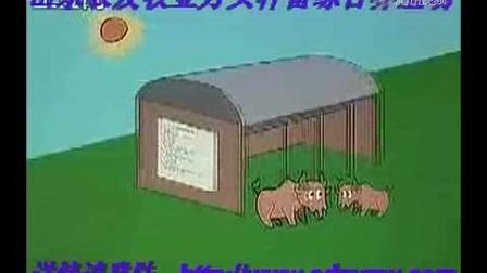 cctv7农广天地鲁西黄牛养殖技术肉牛养殖_4视频
