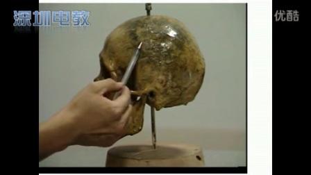 高二美术《关于头像——头骨概况的观察与分析》教学视频,钟君
