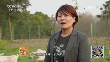 农广天地170615外来媳妇养起本地羊视频