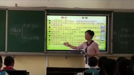 《沙漠之舟》北师大版小学语文四年级-李媛