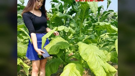 疯狂的亚洲增产神器:绝密图片视频,绿色之路®天时地利,一亿农民都在用,铁杆农科让世界爱上中国造 ???。--铁宝儿