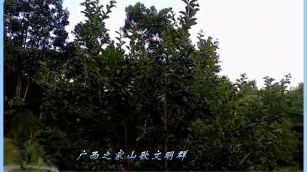 广西之家山歌文明群 开心就好 罗世堂 寄望录制