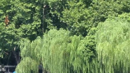 杭州西湖风景区的风情(1)