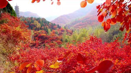 济南红叶谷生态文化旅游区-红叶节