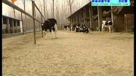 家畜汴养工8牛的养殖技术(中级)卡视频