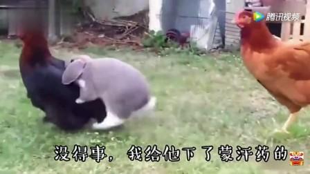 搞笑动物来袭! 这配音也是绝了, 要笑趴了!