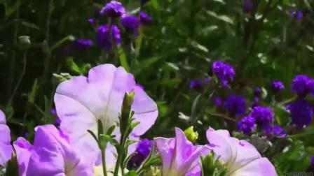 hc - 万紫千红 鸟语花香的大自然风光