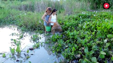 越南农村美女抓鱼十分钟抓得几十斤