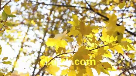 高清实拍大自然秋天阳光植物风景视频